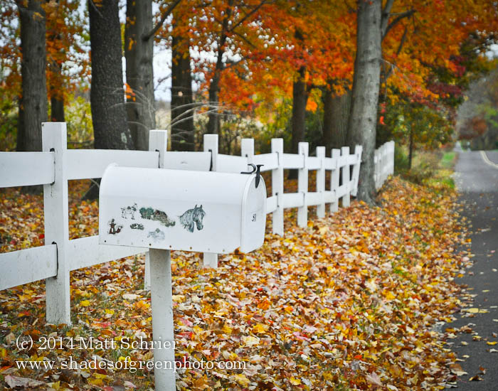 Horse Mailbox - Bucks County PA