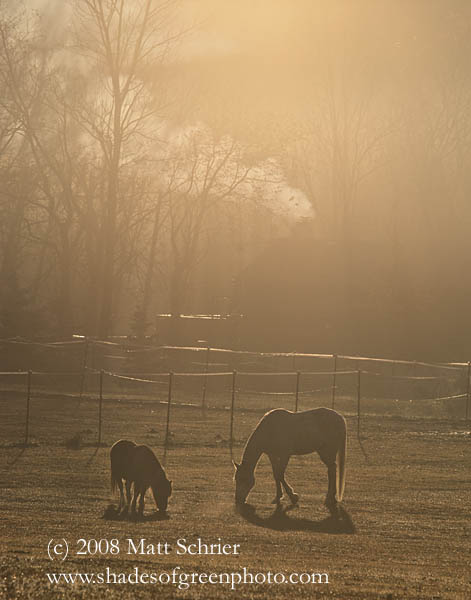 Horse and Pony, Bucks County, Pa