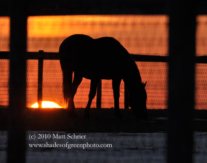 Sunset Grazing, Bucks County, Pa