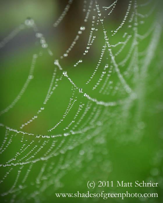 Morning Spider Web, Bucks County, Pa
