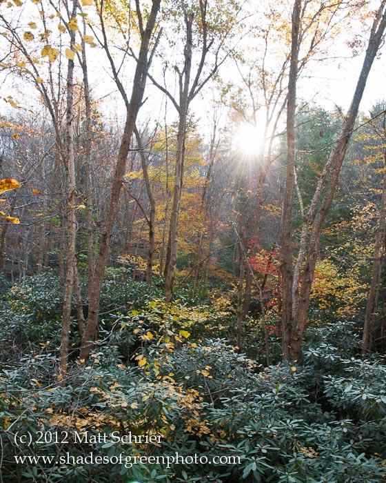 Forest Sunrise, Pocono Mountains, PA