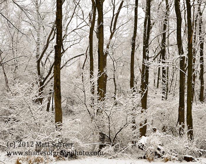 Winter Lace, Bucks County, Pa