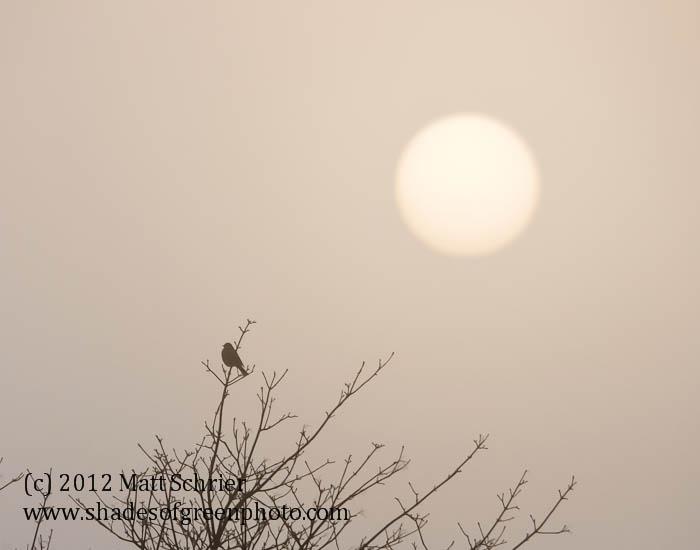 Early Bird, Bucks County, Pa