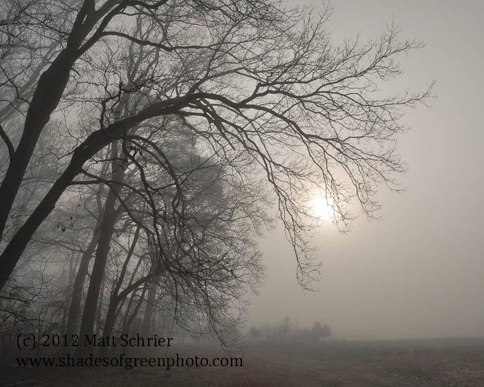 Foggy Sunrise, Bucks County, Pa