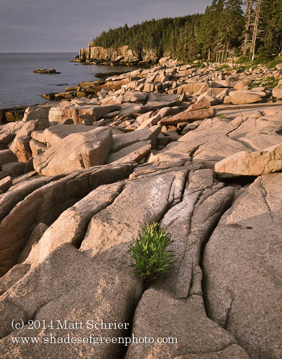 Otter Cliffs Sunrise, Acadia NP, Maine
