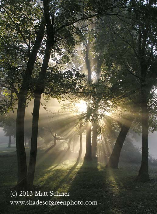 Sunburst through fog, Bucks County, Pa